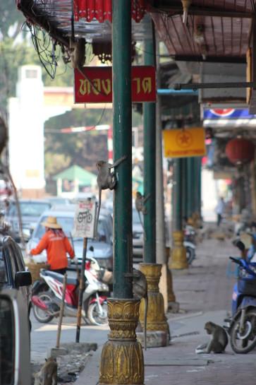Affen Lopburi