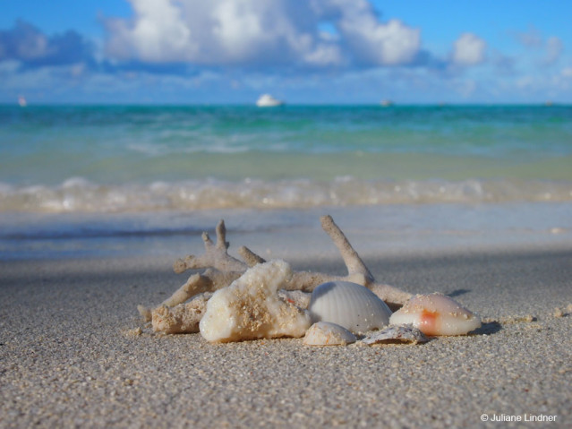 Muscheln Malediven