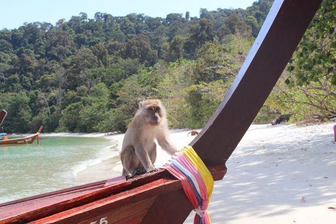 Ein Affe auf einem Boot auf Koh Phi Phi