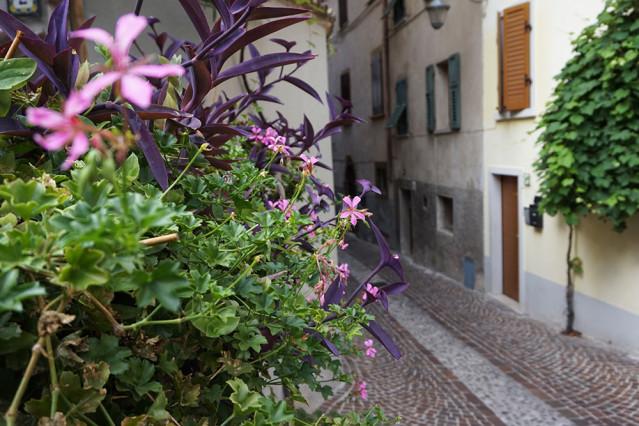 Blumen Limone sul Garda