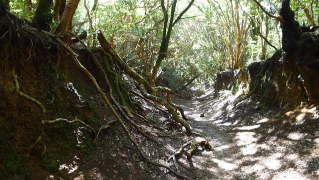 Einfach zauberhaft: Der Märchenwald Bosque de Las Mercedes