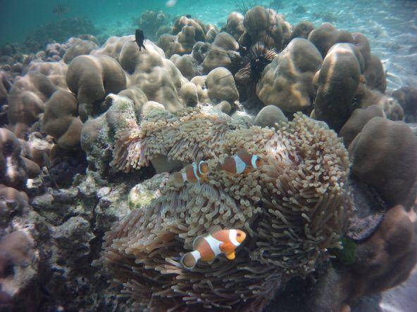 Die kleinen Clownfische sind im Gegensatz zu den vielen anderen Fischen auch überhaupt nicht scheu