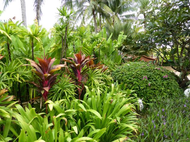 50 shades of green im Garten des Santirburi Beach Resorts
