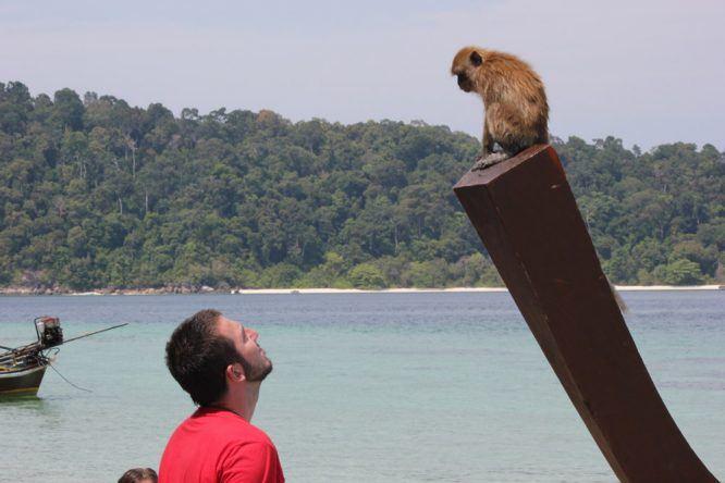 Ein Affe ganz nah auf Koh Phi Phi