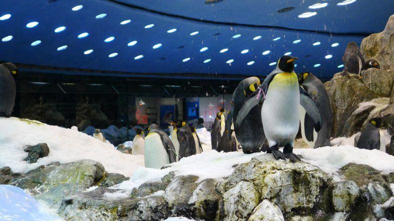 Pinguinarium im Loro Park auf Teneriffa