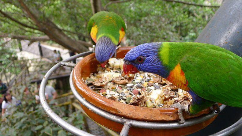 Vögel im Loro Park auf Teneriffa