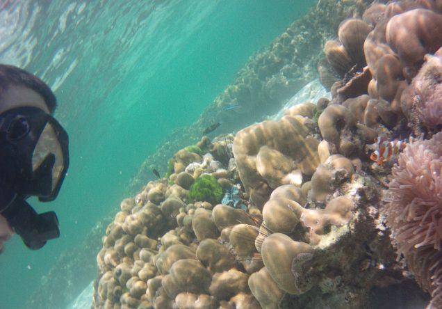 Fische beim Tauchen in Thailand