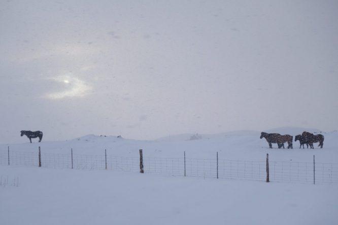 Hart im Nehmen: Islandpferde