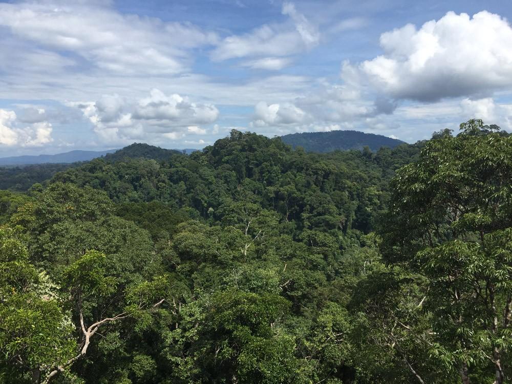 Da sich das reiche Brunei allein durch seine hohen Öl-Vorkommen finanziert, ist bisher kaum ein Baum gefällt worden