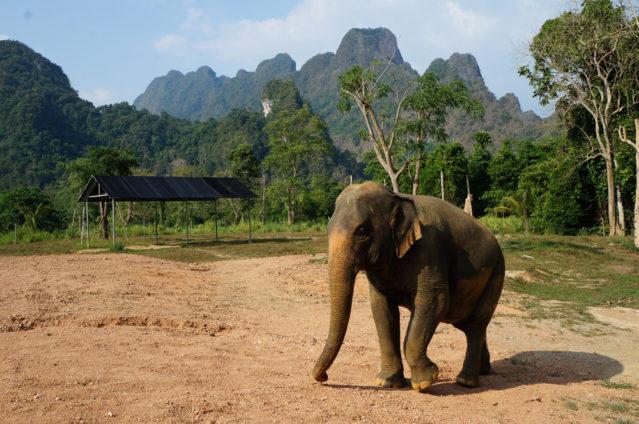 Elefanten hautnah erleben, ist hier möglich!