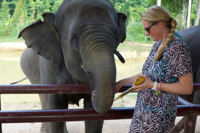 Elefantenstreicheln und -füttern