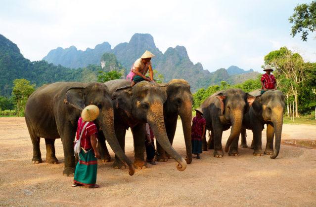 Elephant Hills Dschungel Safari in Thailand