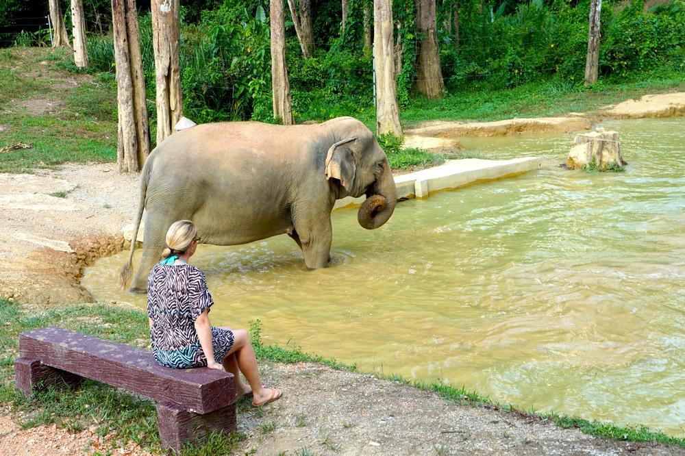 Der Elefant und ich
