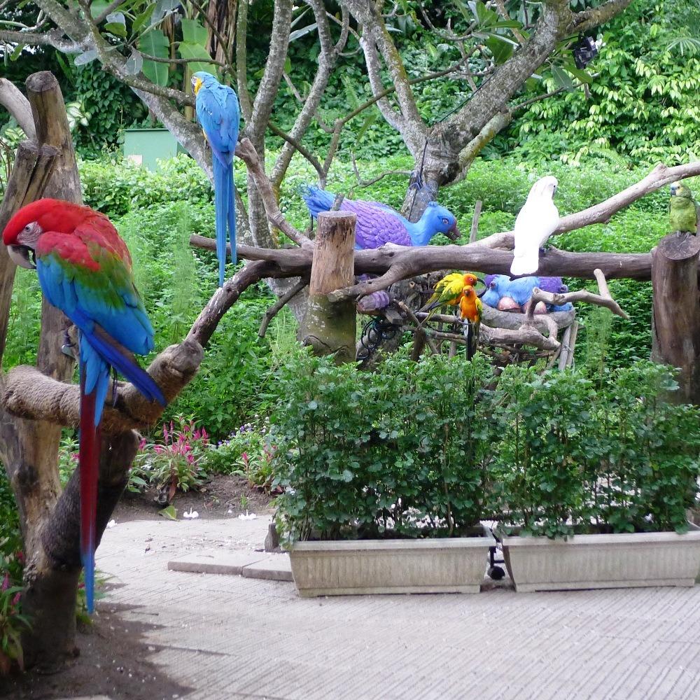 Farbenfrohe und prächtige Papageien mitten auf Sentosa
