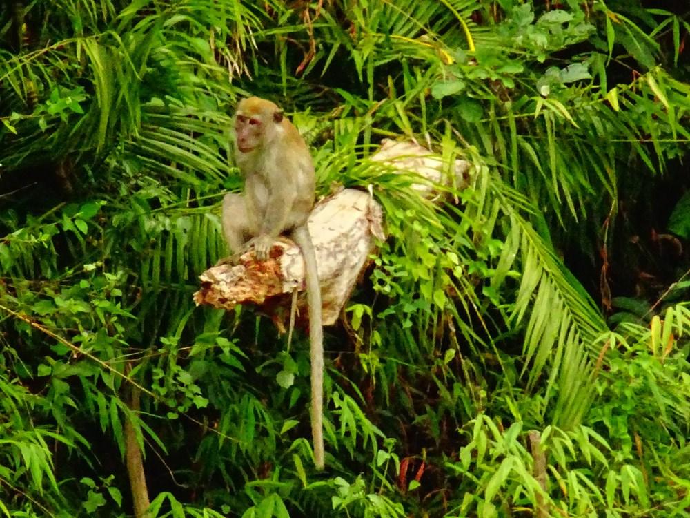 Affen dürfen hier natürlich nicht fehlen