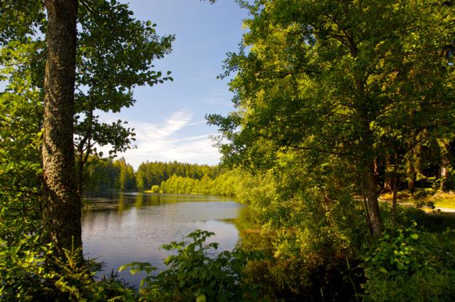 Eines von vielen Ausflugszielen Bayerns: Bayrischer Wald