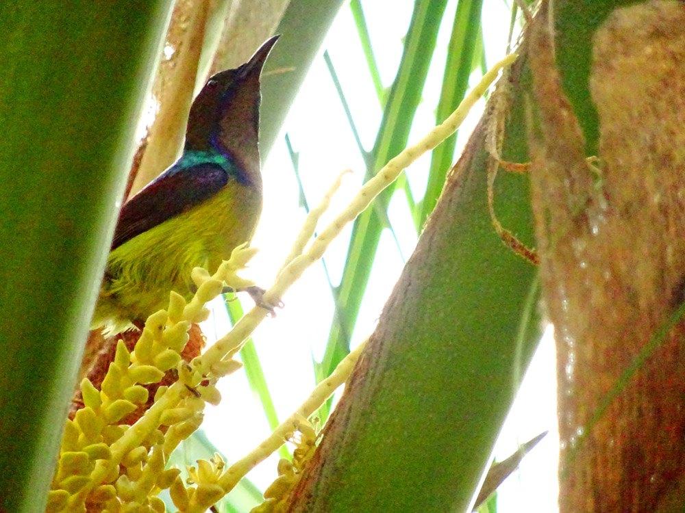 Die Tierwelt auf Langkawi