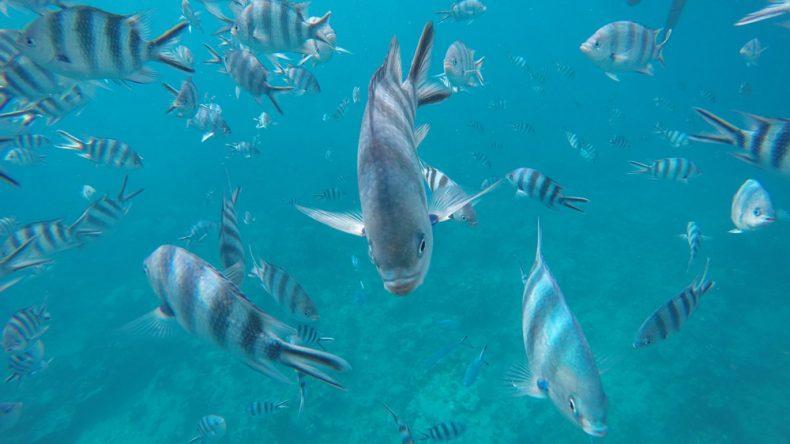 Fische küssen