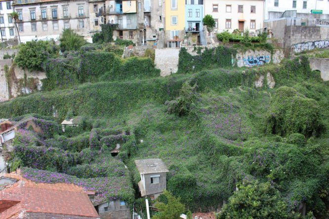 Es geht auch grün in Porto