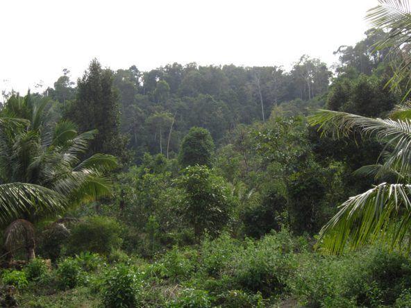 Wer an den Weststrand Koh Rongs gelangen möchte muss den einstündigen Marsch durch den dichten Urwald auf sich nehmen