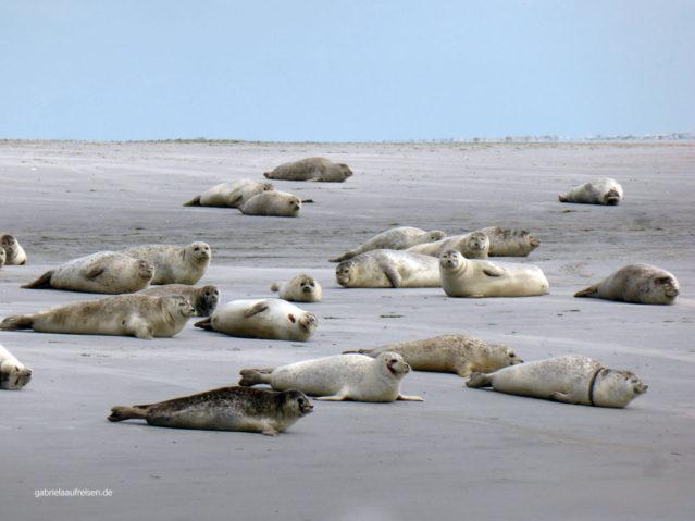 Seehunde auf Norderoogsand