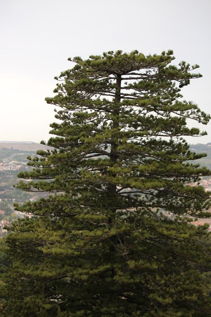 Sintra liegt nur eine halbe Auto-/Zugstunde von Lissabon entfernt und ist umgeben von tiefgrünen Wäldern