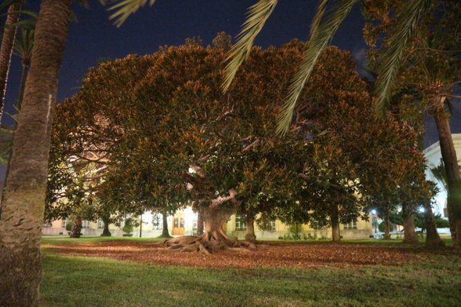 Wunderschöner Baum in der Nähe des Denkmals