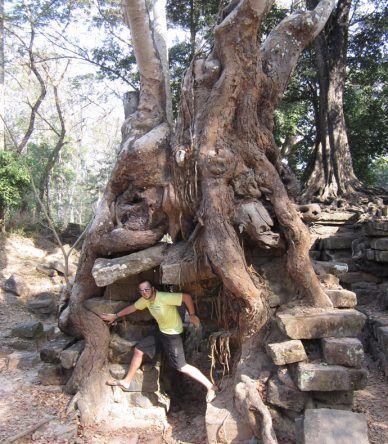 An einigen Stellen, wie hier am Chau Say Tevoda, hat der Urwald die Tempel fast vollständig auseinandergenommen