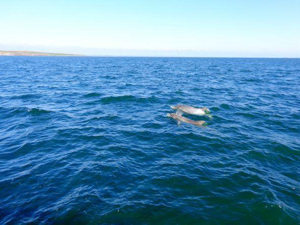 Delfin in Sicht