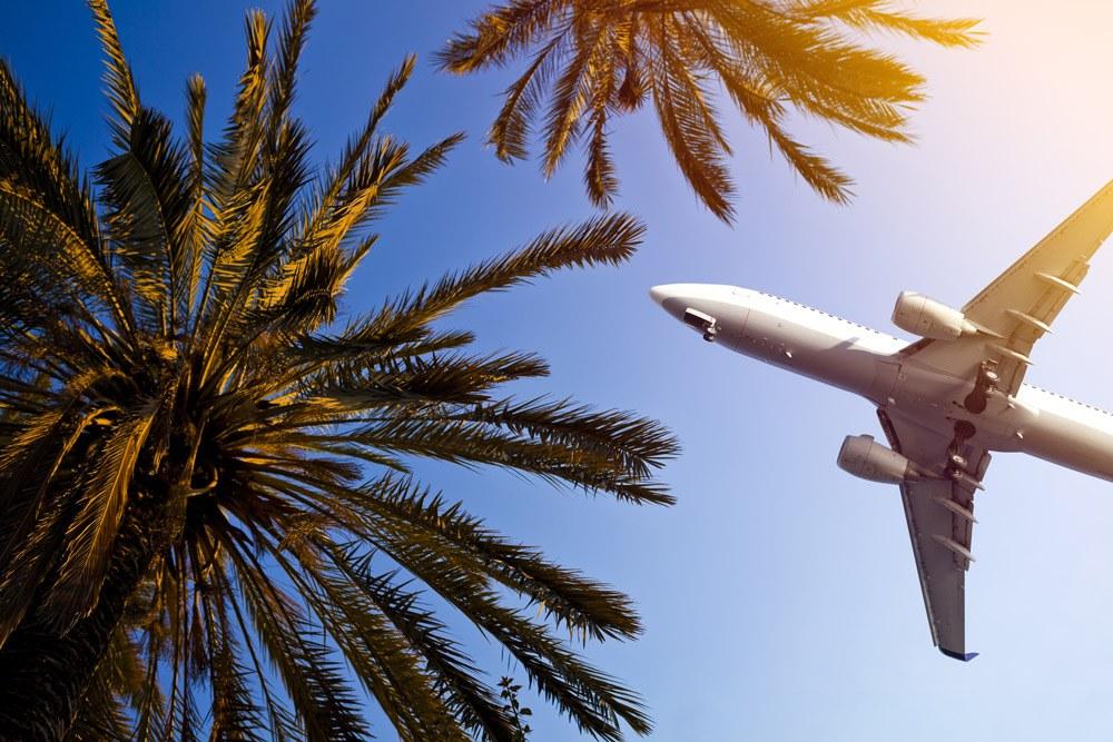 Flugzeug fliegt über Palmen