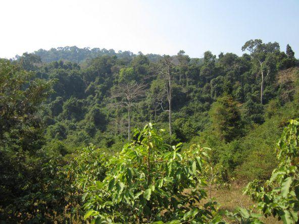 Die archäologischen Funde von Kbal Spean liegen versteckt inmitten üppiger Vegetation