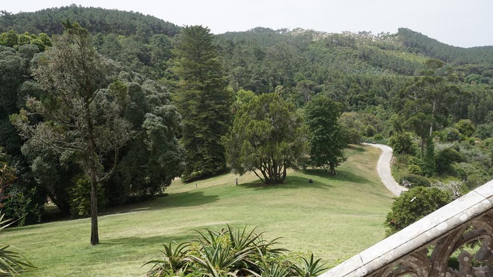 Grün über Grün im Parque de Monserrate