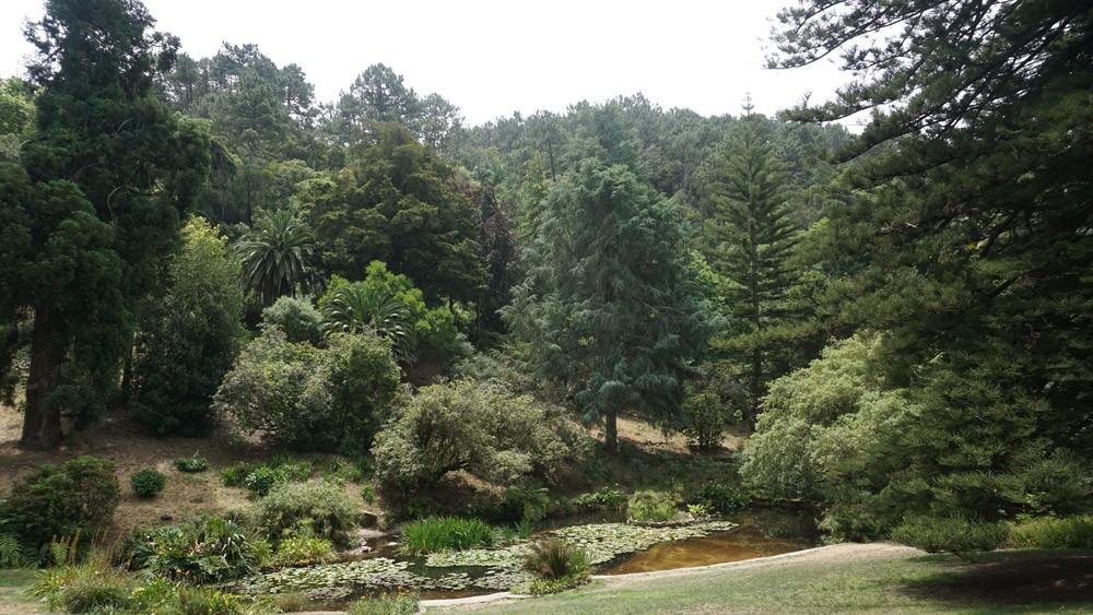 Riesengroß: Der Parque de Monserrate in Sintra