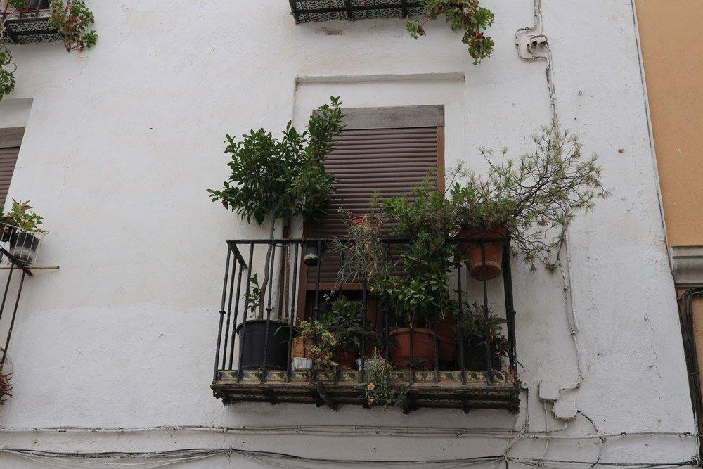Die Balkone in Granada bieten zwar nicht viel Platz, werden aber dennoch mit zahlreichen Pflanzen beschmückt. Die Touristen freuts!