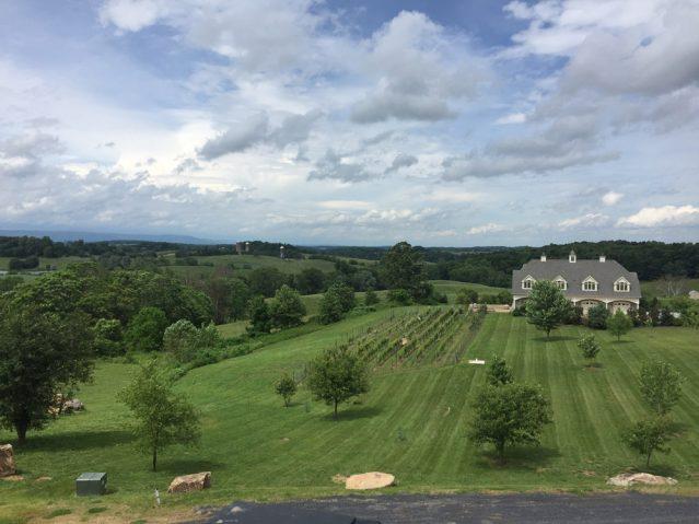 Etwa eine Stunde entfernt liegt das Blue Valley Vineyard and Winery