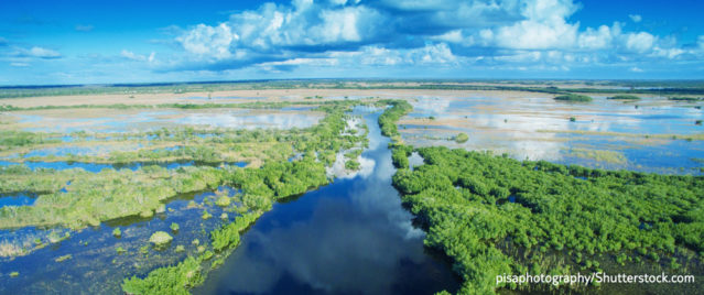 Everglades in Florida (pisaphotography/Shutterstock.com)
