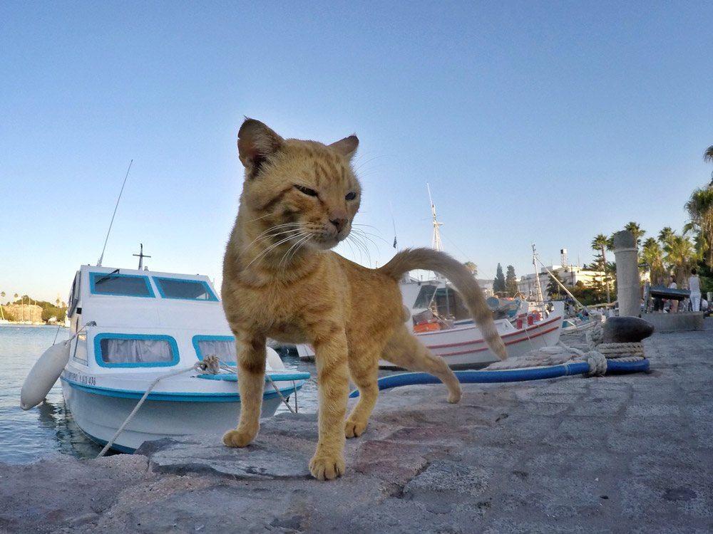 Miau! Direkt am Hafen, bei den vielen Fischen, fühlen sich auch Katzen wohl!