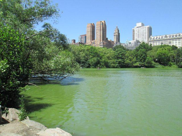 Mitten in der Stadt befindet sich der Central Park
