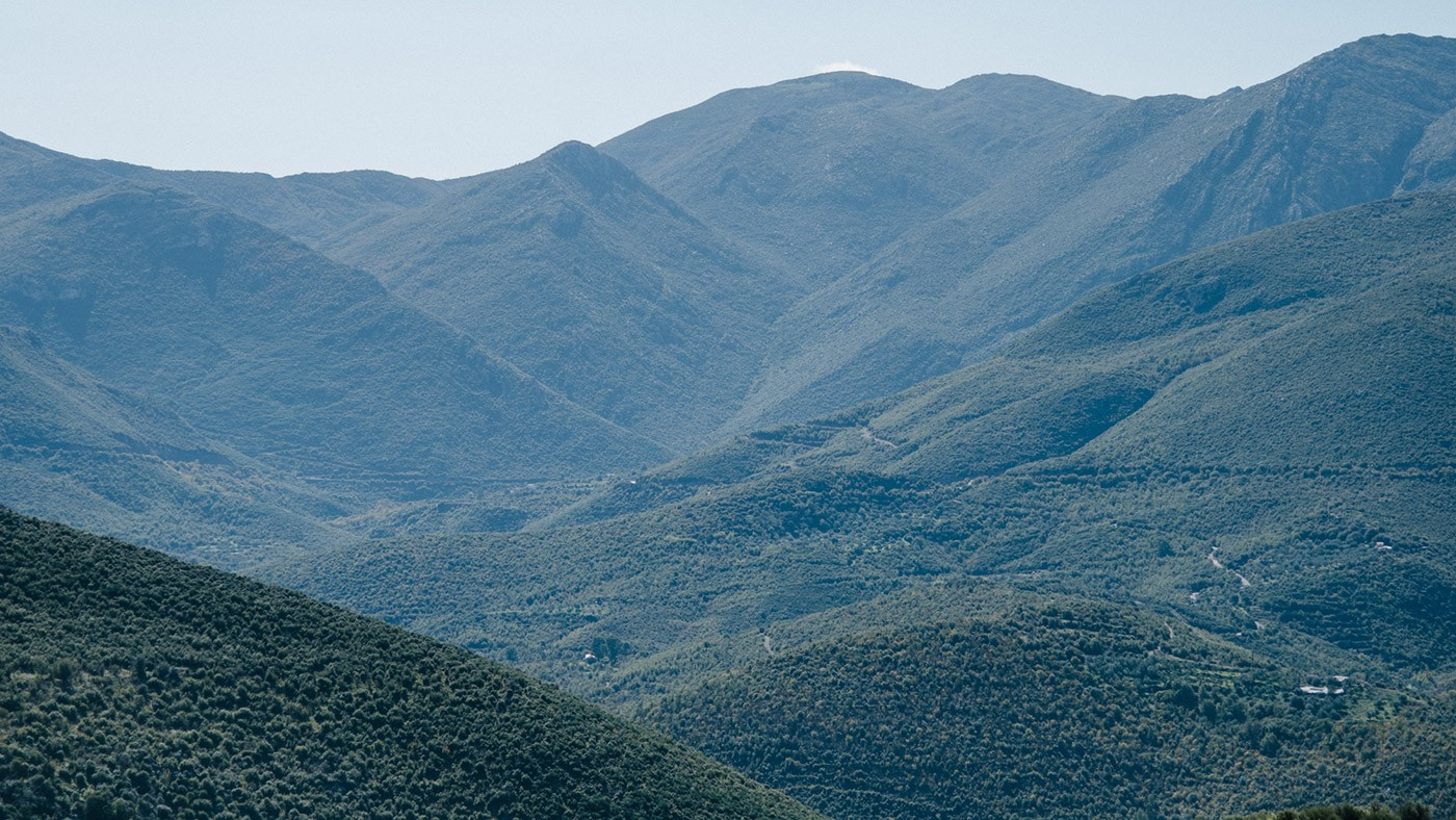 So schön grün kann Griechenland sein! (Fotocredit: Alexandra Kryanewa)