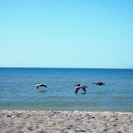 Im Tiefflug am Strand entlang