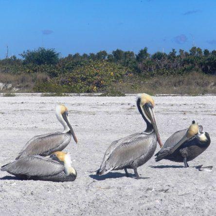 Den Pelikanen ganz nah