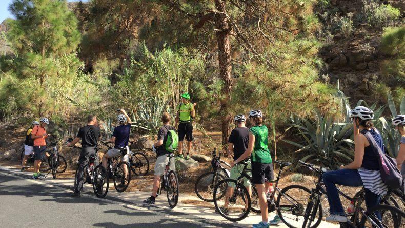 Grüne Landschaft Gran Canria