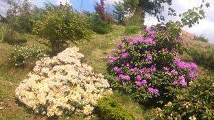 Die wunderschöne Natur des Elbsandsteingebirges