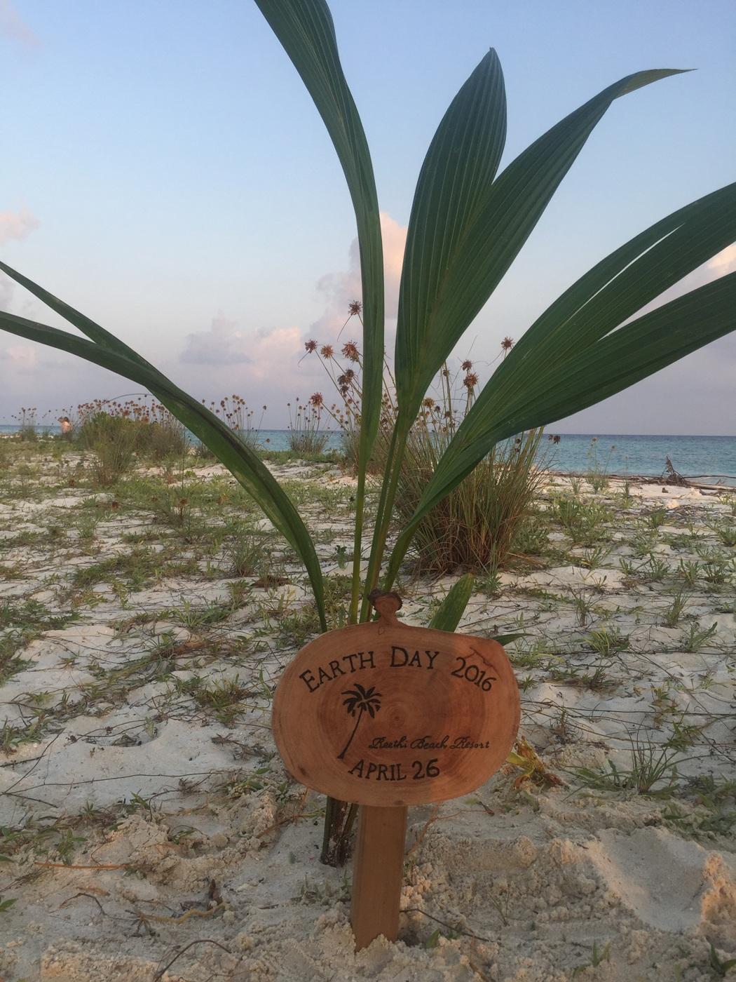 Die Gäste können eine Palme am Strand pflanzen.