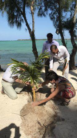 Gäste pflanzen eine Kokospalme