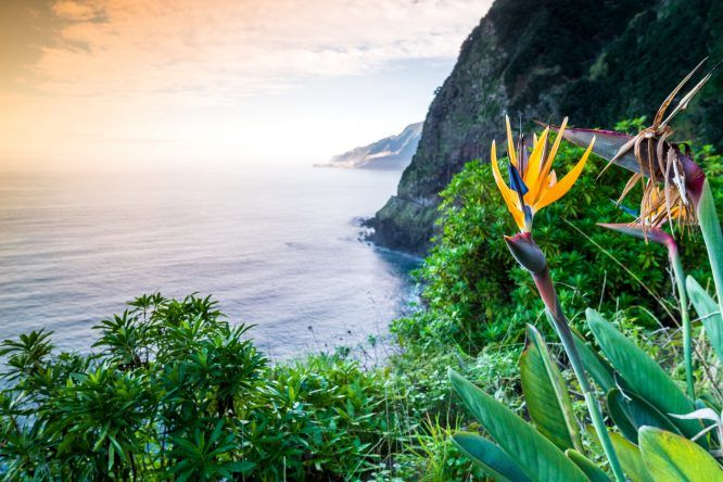 Reiseziele 2017: Madeira