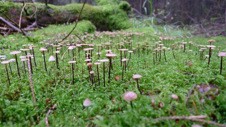 Kinder lieben es Pilze zu suchen. Und vor allem zu finden!