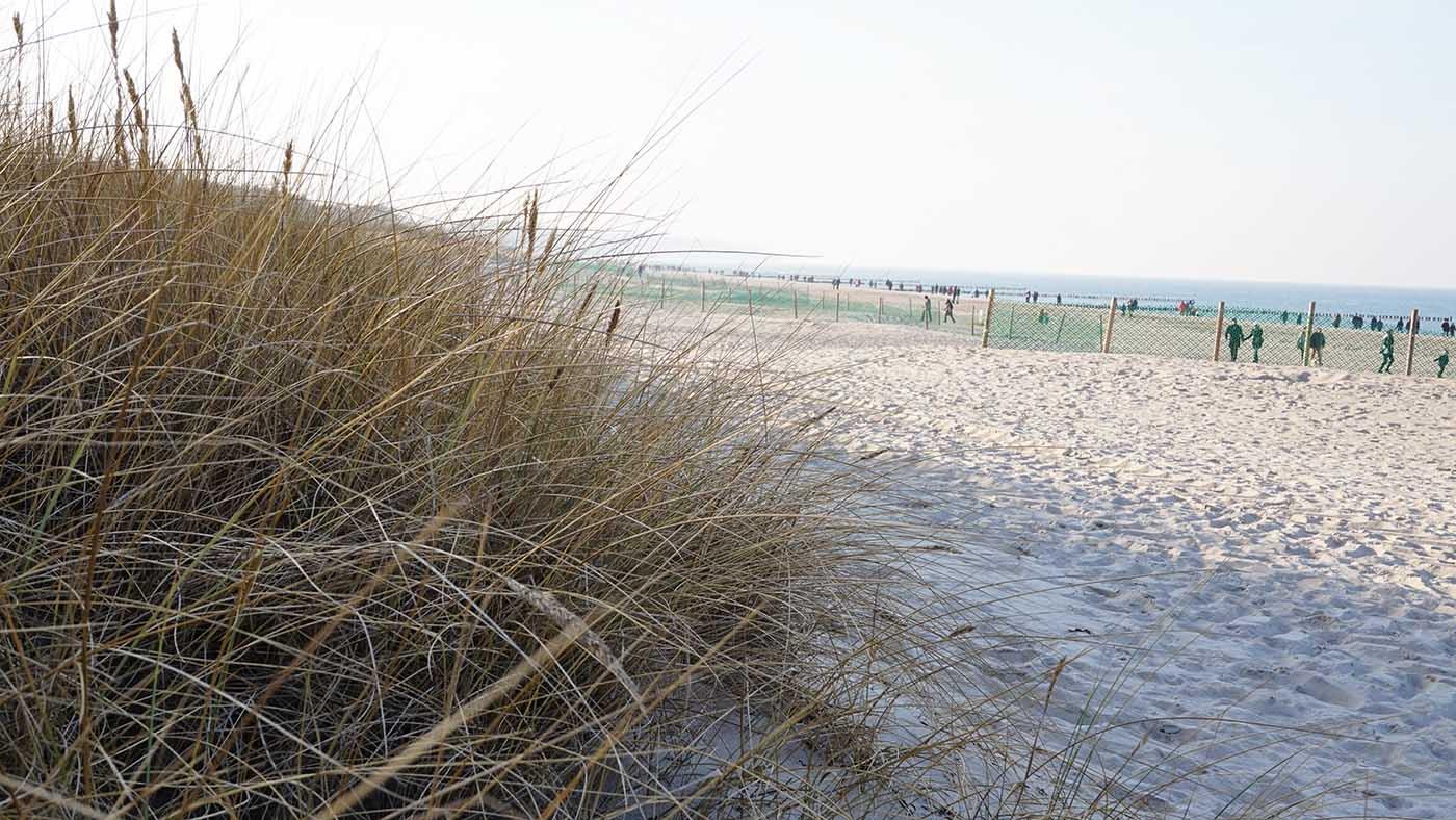 Dünen und Sandstrand in Warnemünde