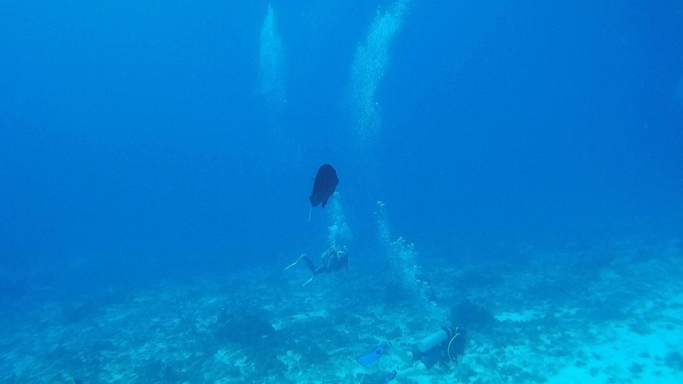 Fisch drängelt sich vor die Linse