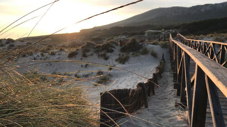 Dünen wie an der Nordsee an der Cala Mesquida